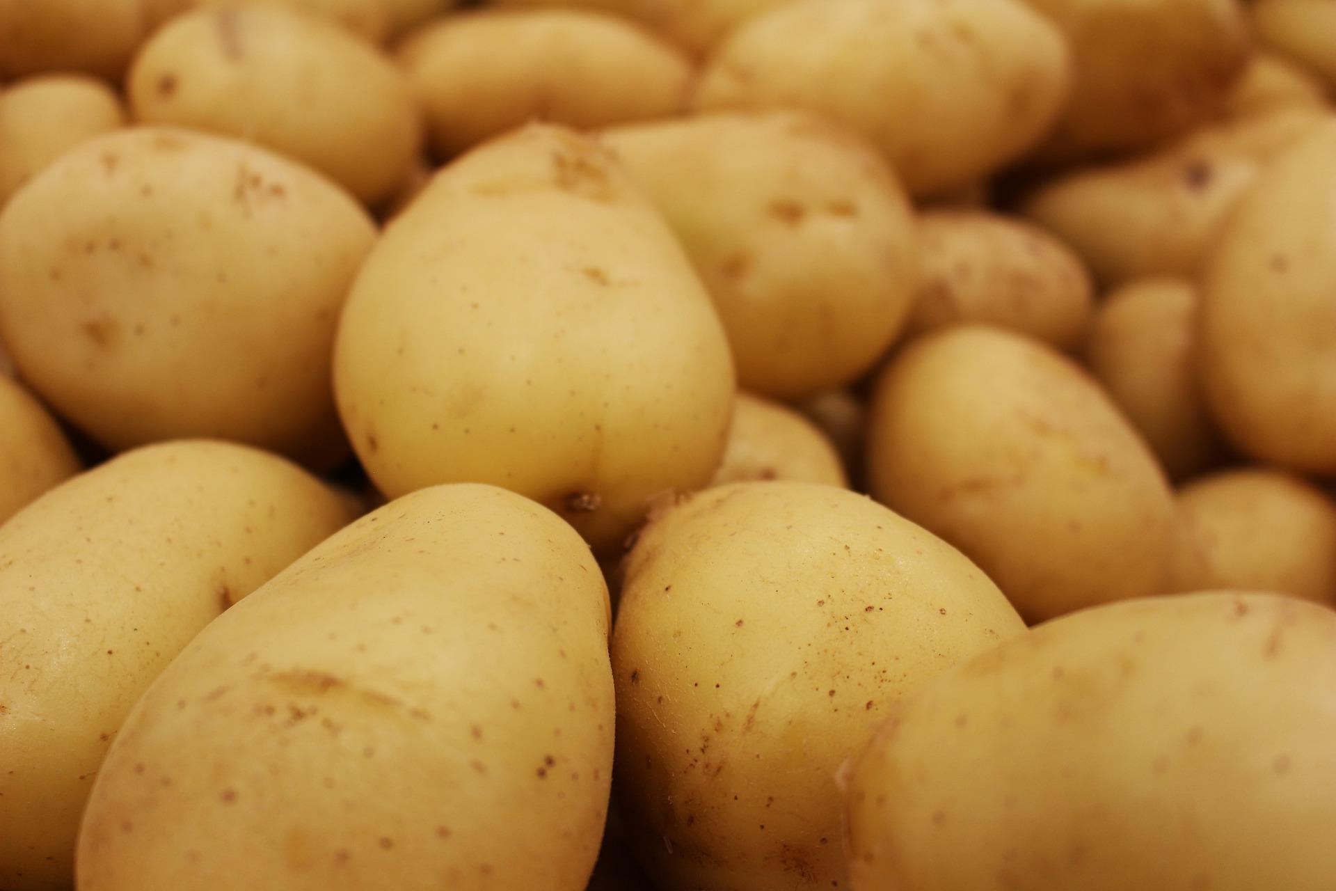 На Дніпропетровщині завершили збирання урожаю картоплі