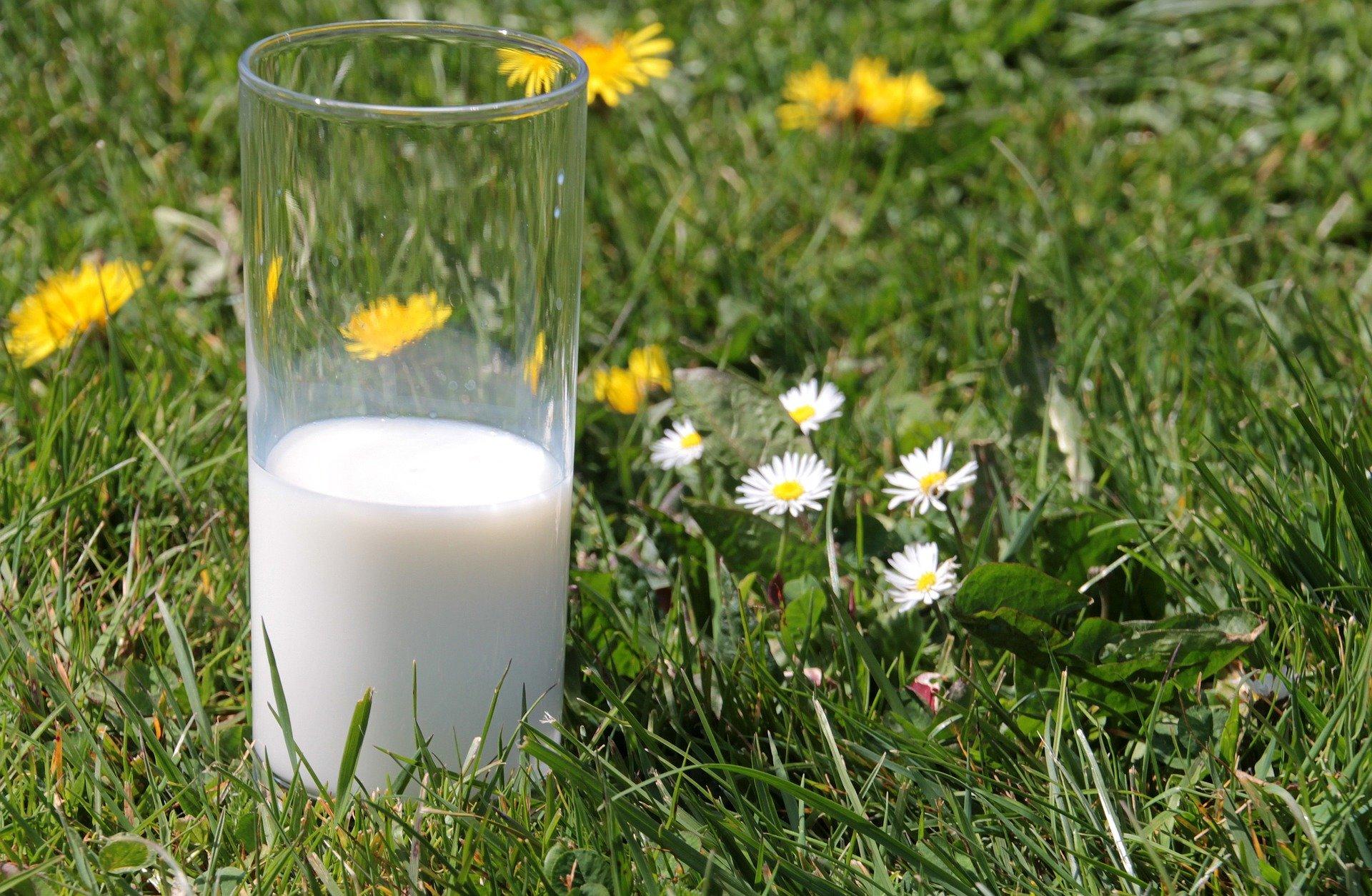 Частка молока екстраґатунку зданого на переробку зросла до 26,4%