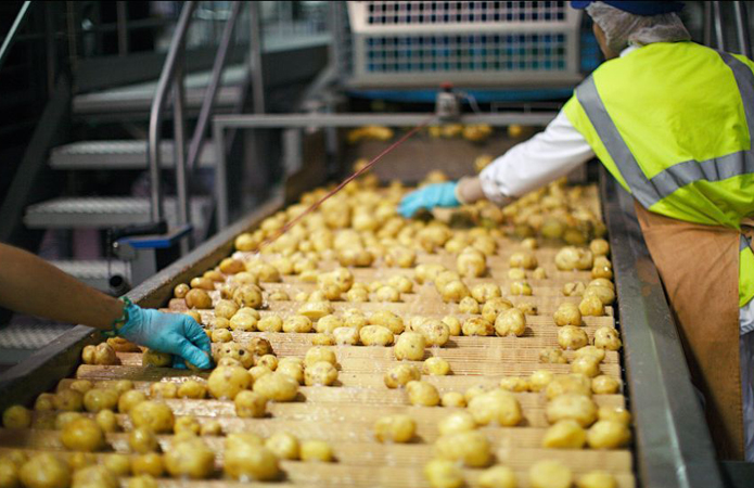 В Україні побудують потужний завод із переробки картоплі