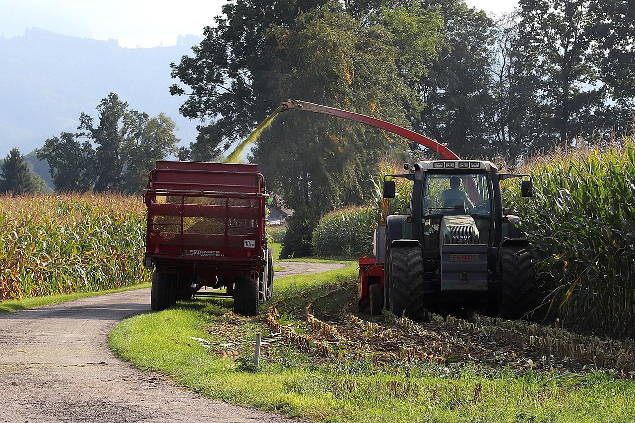 IGC підвищив прогноз світового врожаю зерна на 2021/22 МР