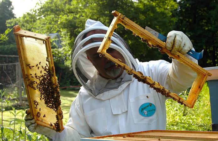 Бджолярі Луганщини активно паспортизують пасіки
