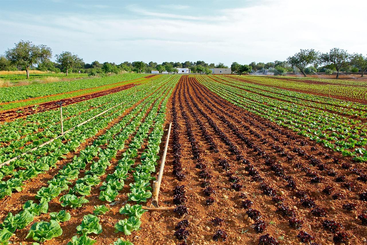 Рентабельність виробництва у фермерських господарствах вища, ніж у сільгосппідприємствах — експерт