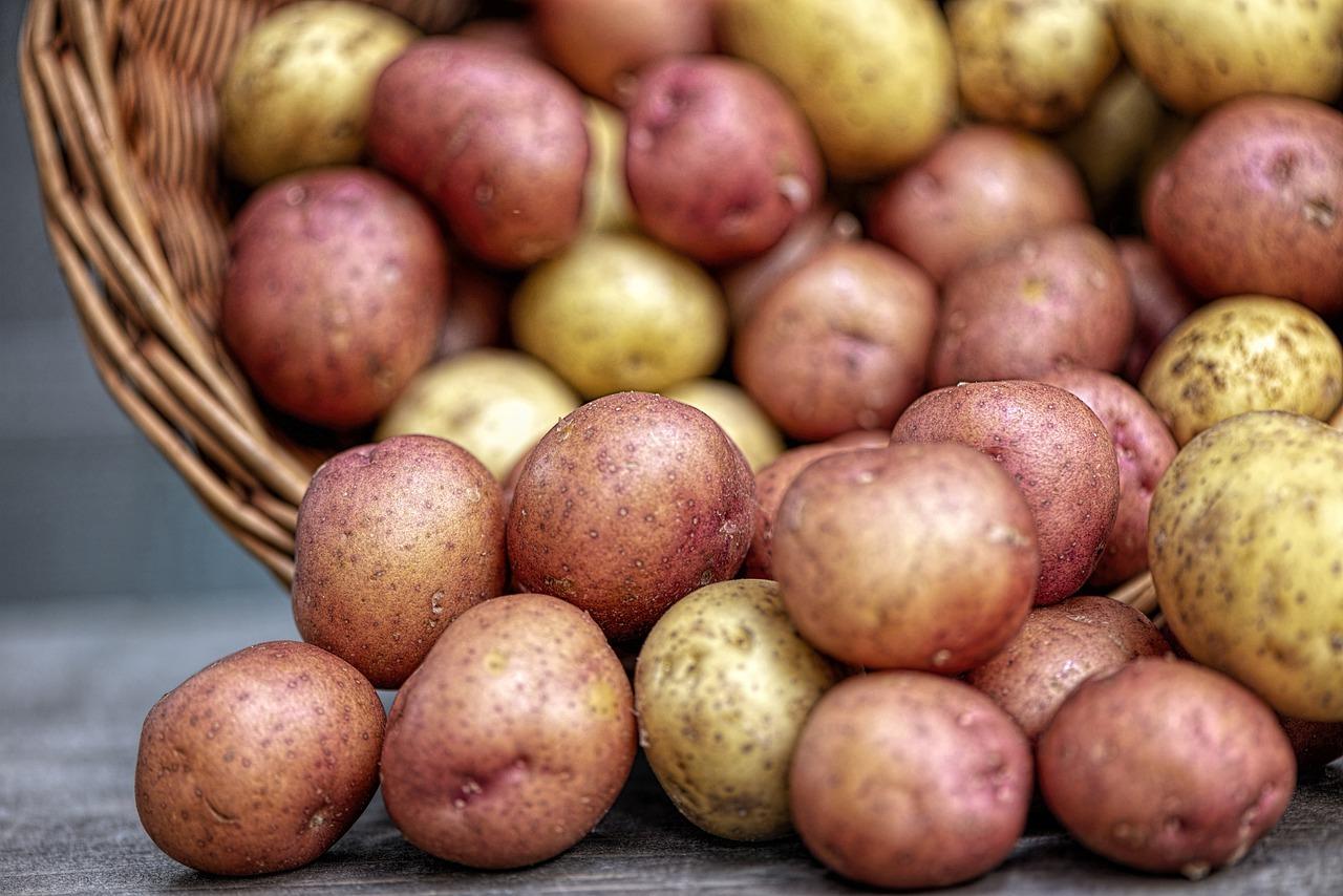 На Рівненщині затяжні дощі затримують збір картоплі