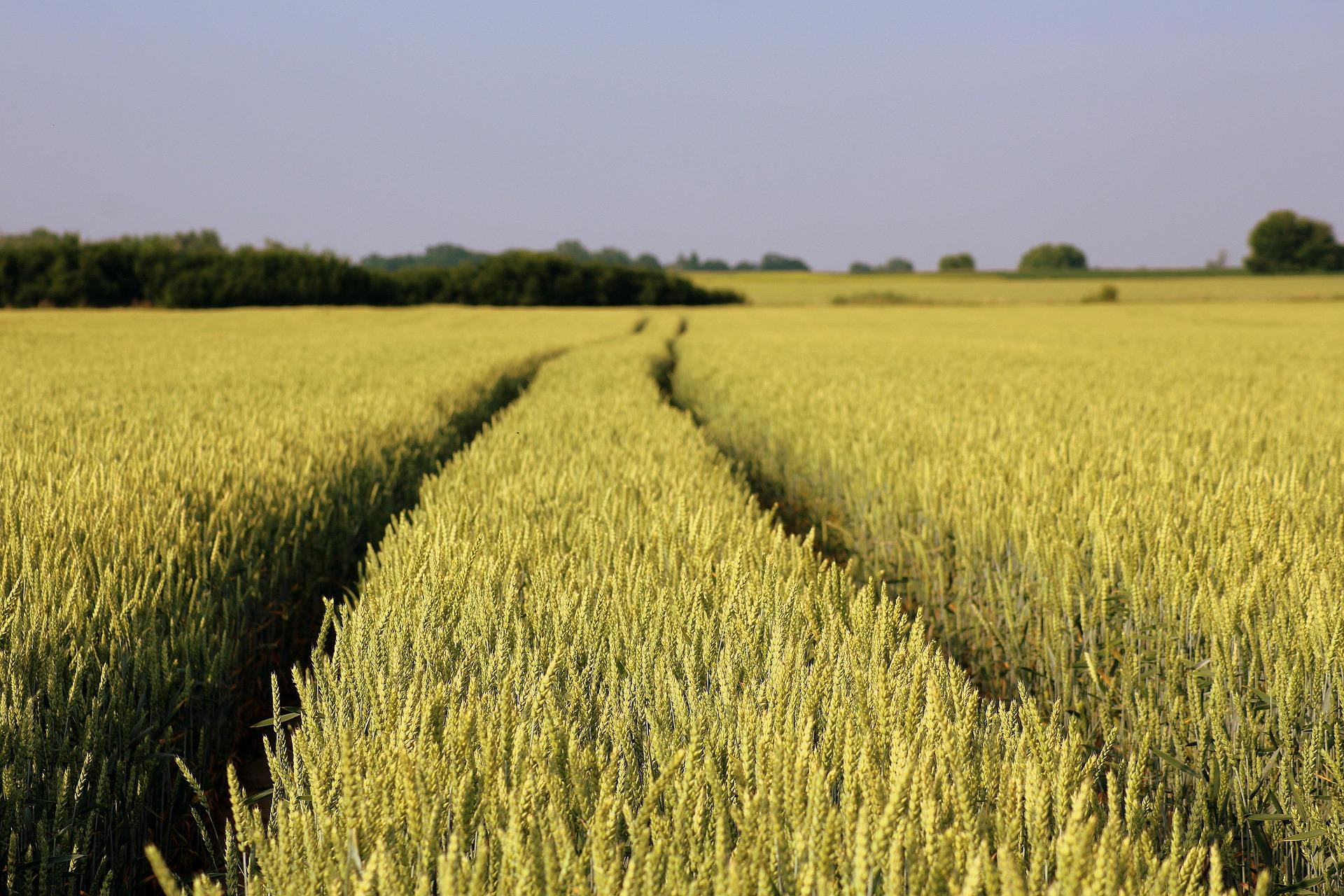 Держгеокадастр передасть ОТГ 2 млн гектарів земель сільгосппризначення