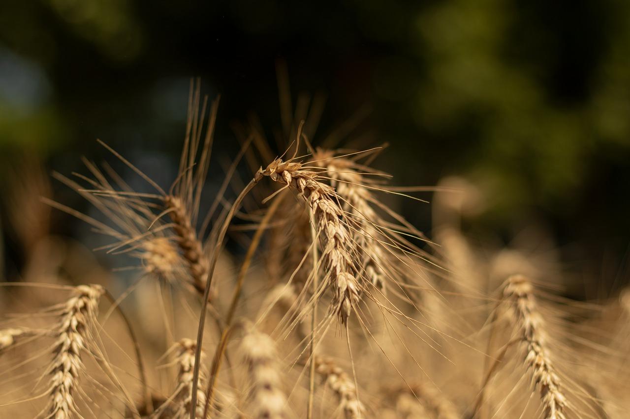 З України експортовано 53,4 млн тонн зерна