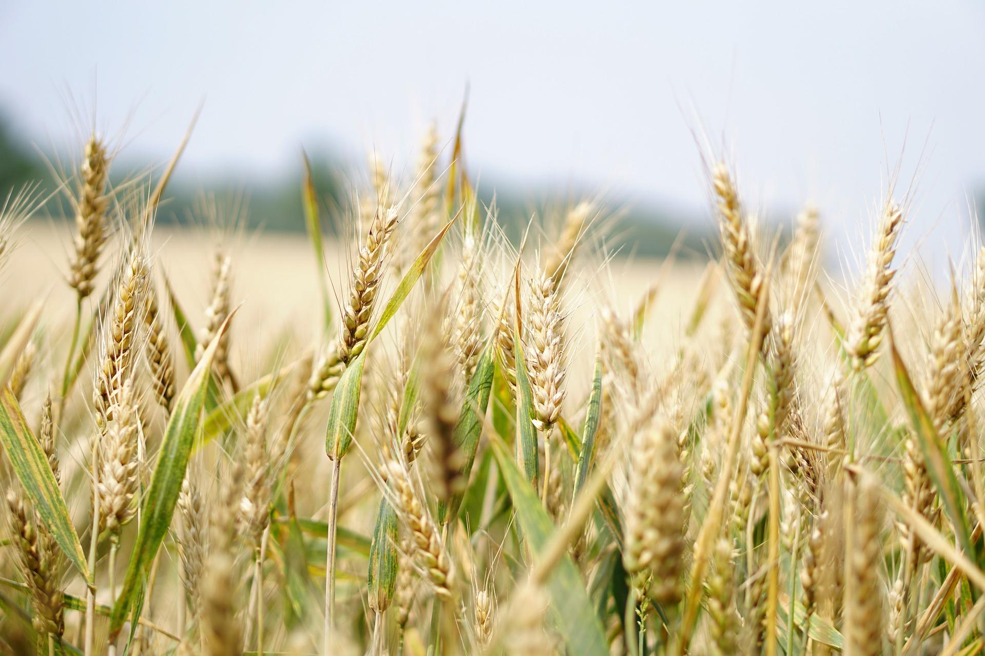 З України експортовано 54 млн тонн зерна