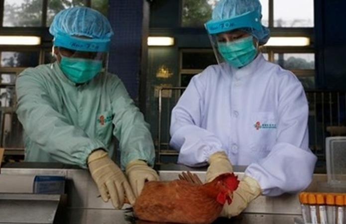 В Японії через грип знищать 146 тис. голів птиці