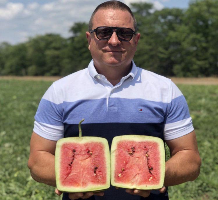 На Одещині вперше виростили органічні квадратні кавуни