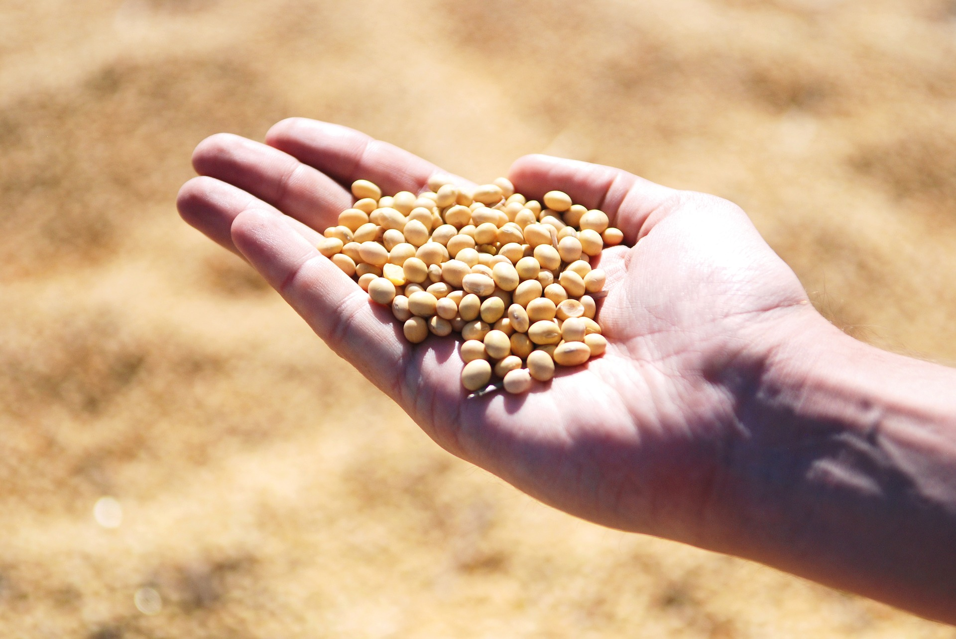 З початку року Україна експортувала 830,4 тис. тонн сої