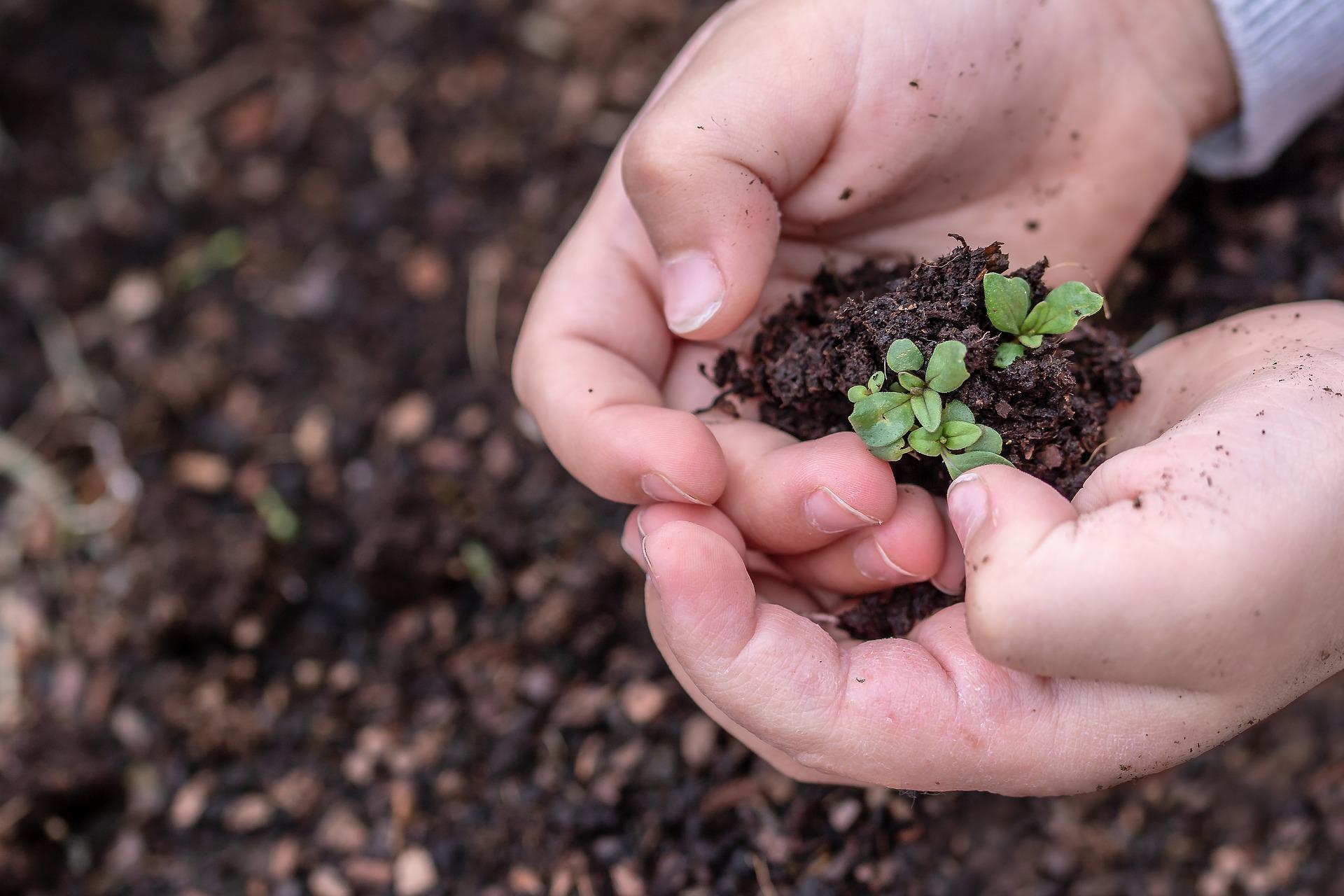 МХП надав орендодавцям майже 2 тонни насіння овочевих культур