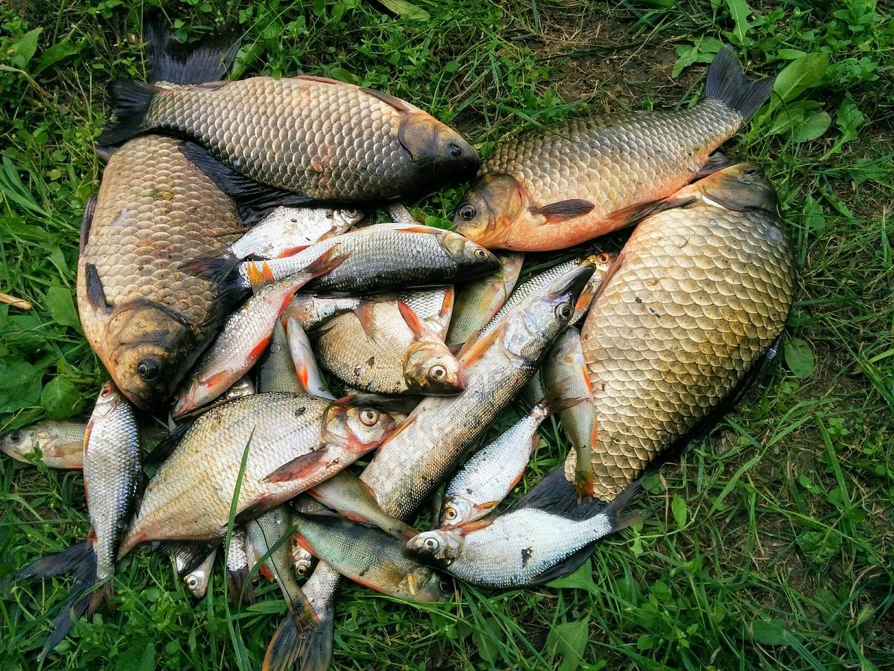 У 2019 році промисловий вилов риби збільшився на 2,2%