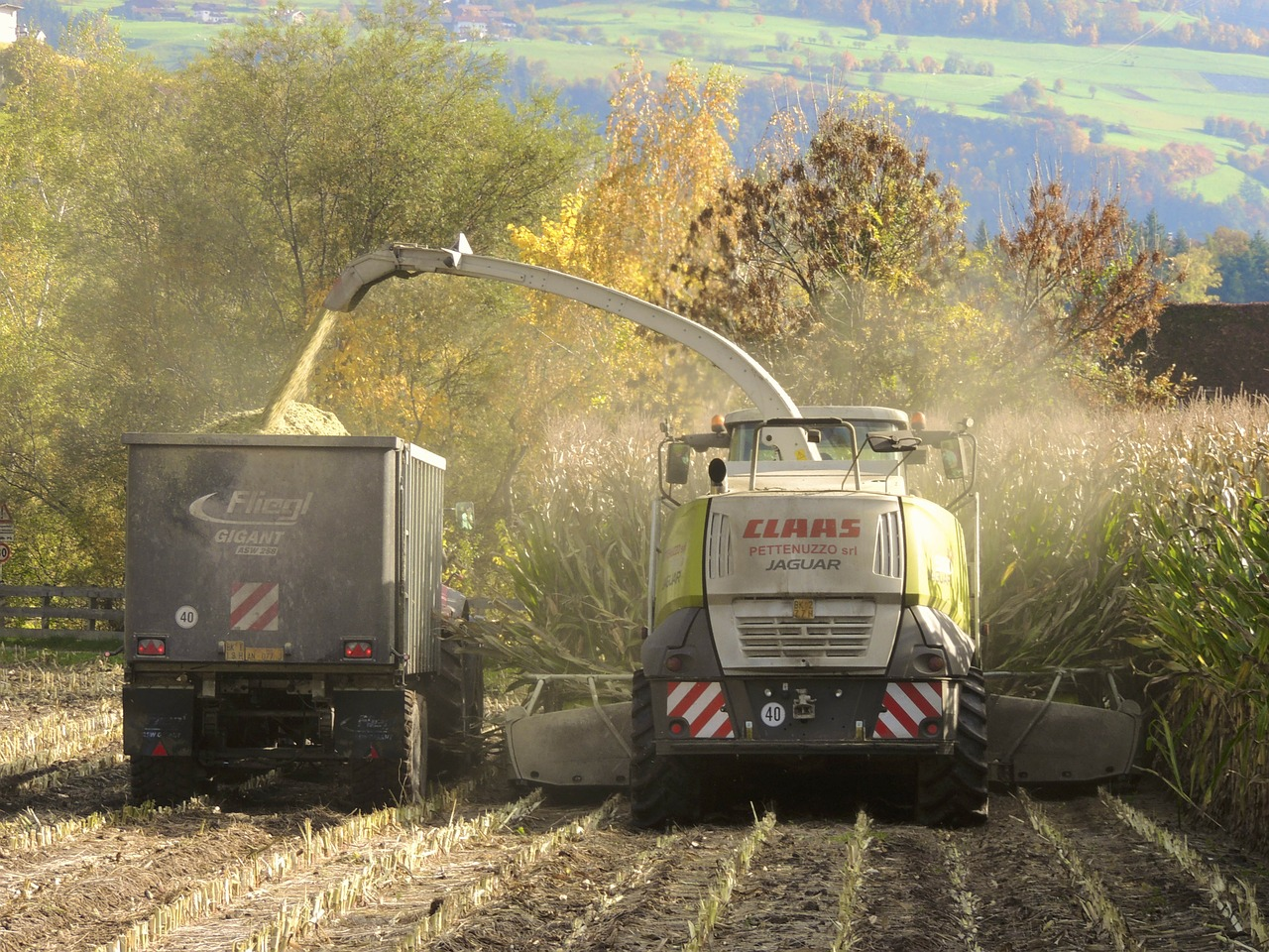 З України експортували 11,4 млн тонн зерна нового врожаю