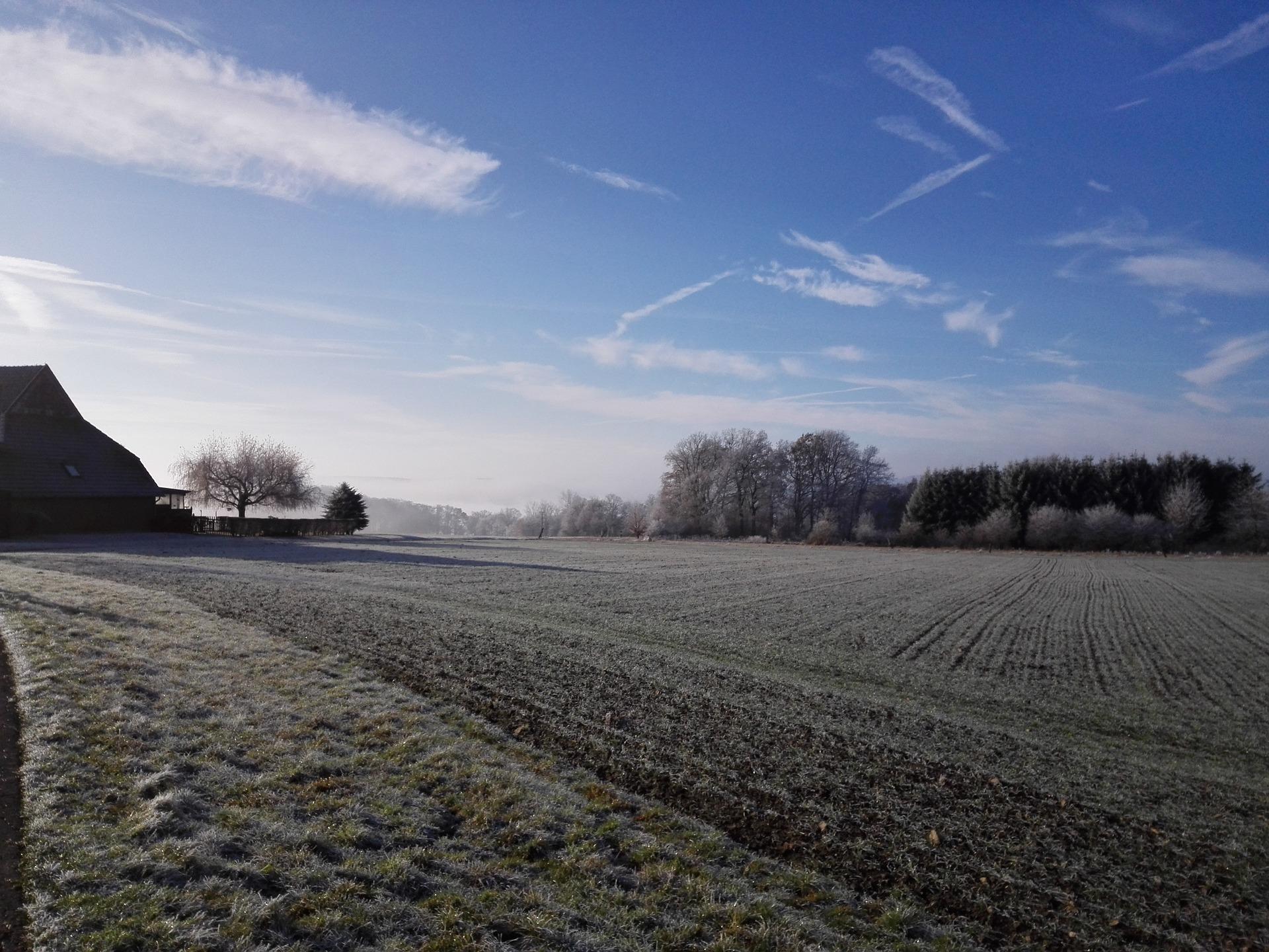 Через значне зниження температури є ризик для озимих зернових