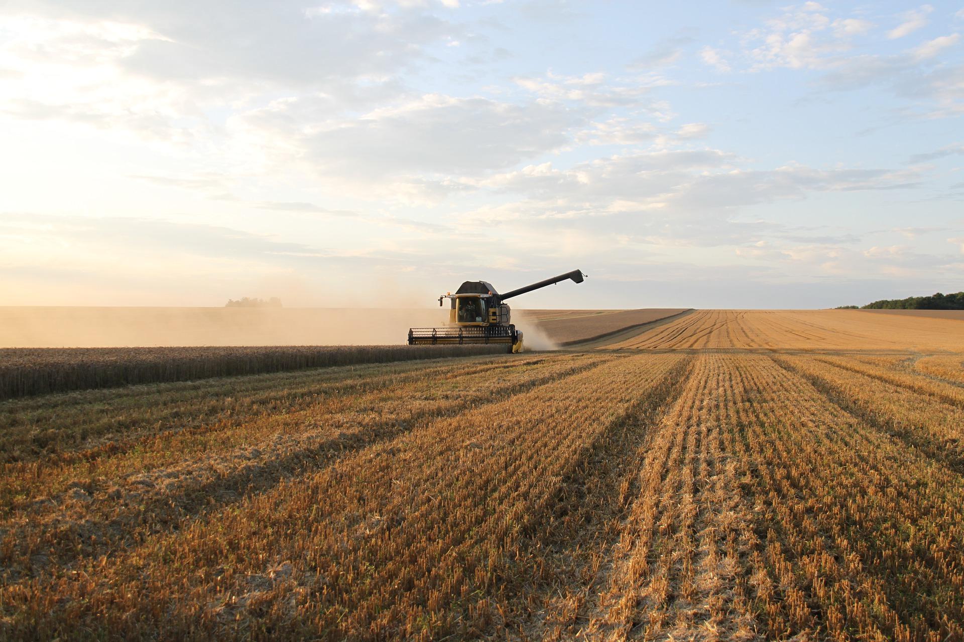 Україна розпочала експортувати зернові нового врожаю