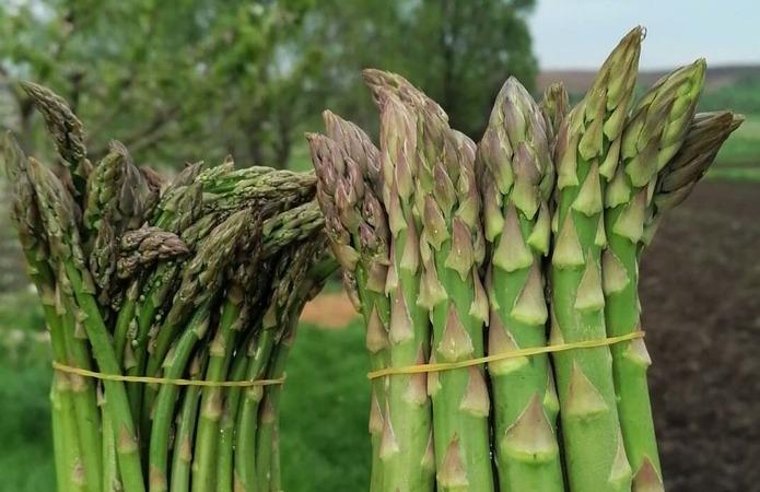 Виробник: Закладка гектару спаржі обходиться в 30 тис. грн