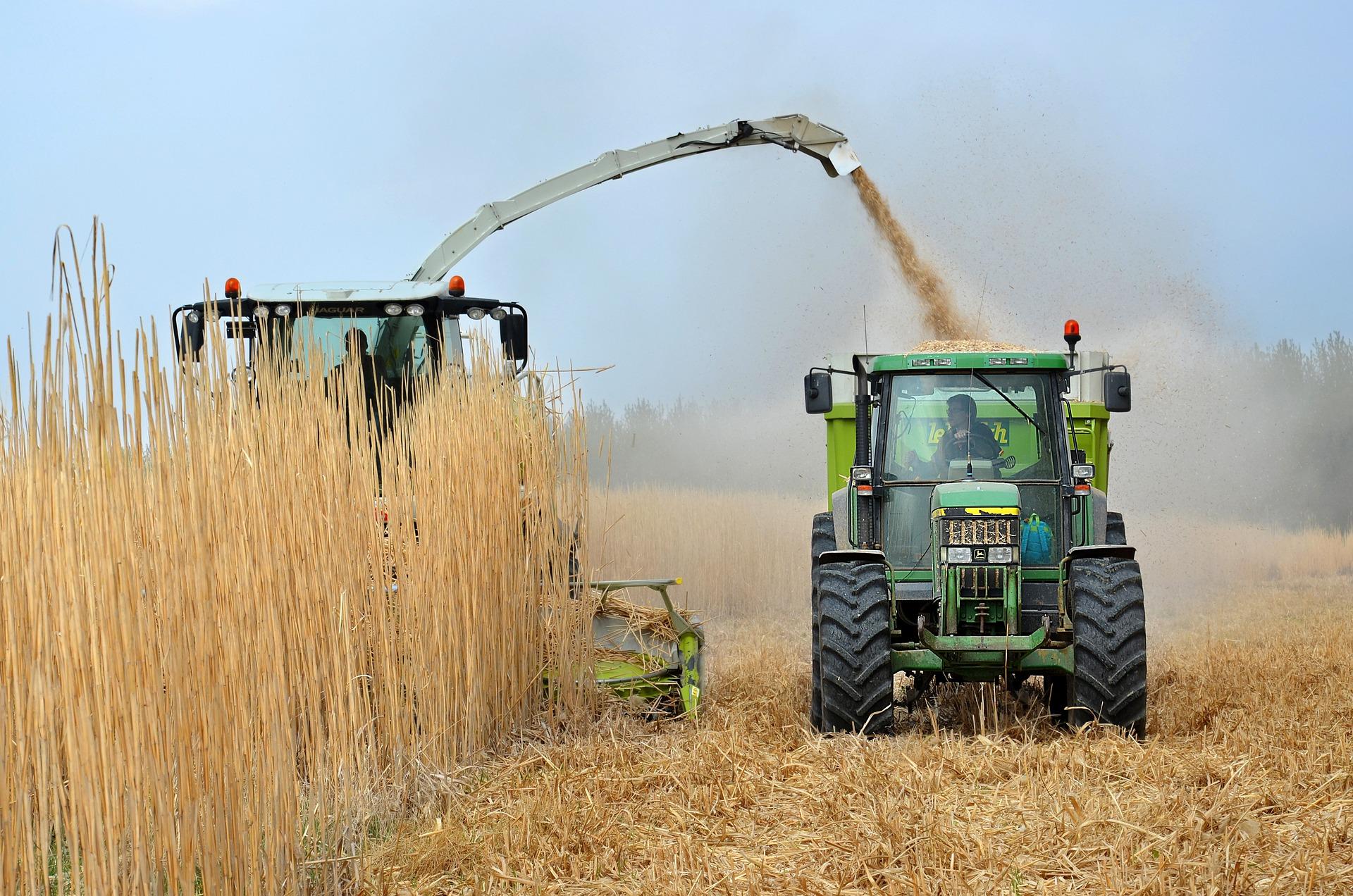 Мінекономіки не планує переглядати граничні обсяги експорту українського зерна