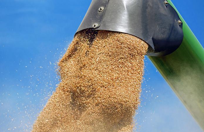 Україна— друга в світі за експортом зерна. Після США