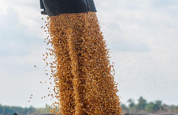 Волинь встановила рекорд із виробництва зернових та зернобобових культур