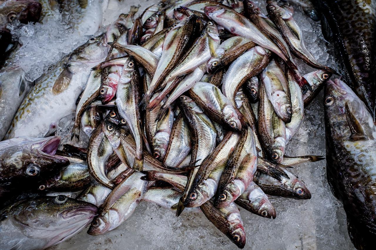 Україна збільшила експорт готової та консервованої риби на 19%