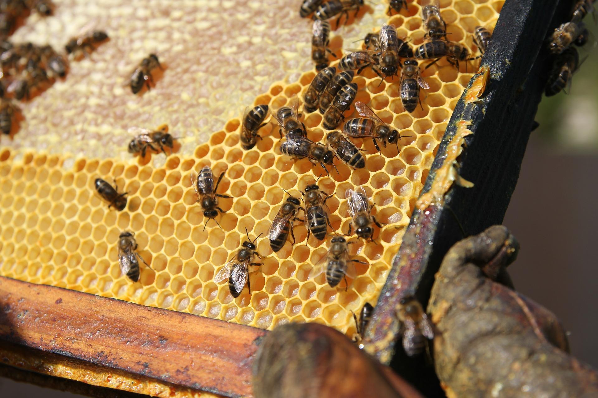 Попит на продукти бджільництва в Україні зріс у 2,5 рази — експерт