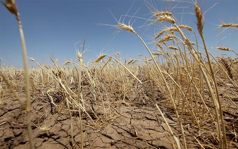 Втрачені озимі: чому уряд гальмує початок компенсації за загиблі посіви