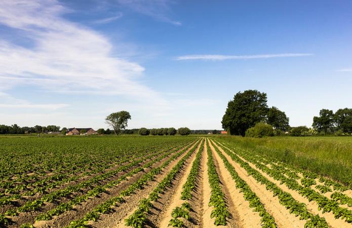 В Мінекономіки визначили напрямки розвитку картоплярства