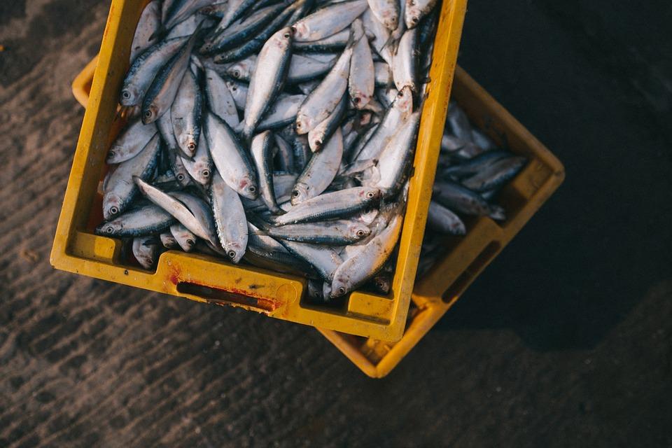 Україна збільшила експорт риби та ракоподібних на 23,9%
