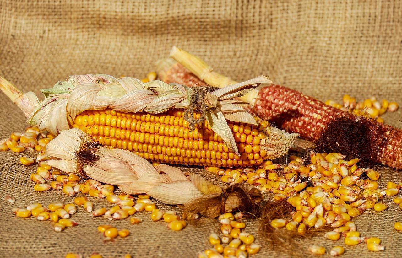 З України експортували 21,9 млн тонн кукурудзи