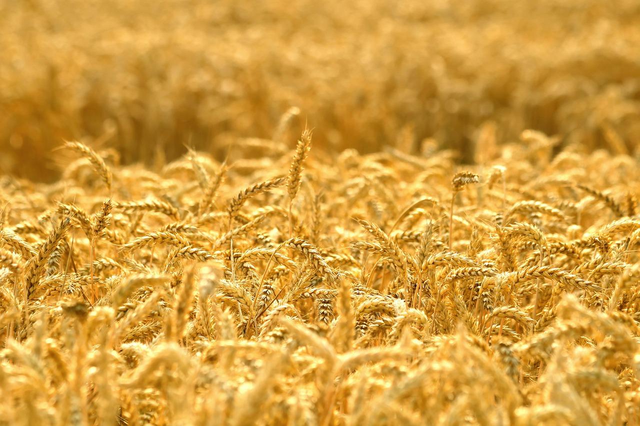 Запаси зернових в Україні на 33% менше минулорічних