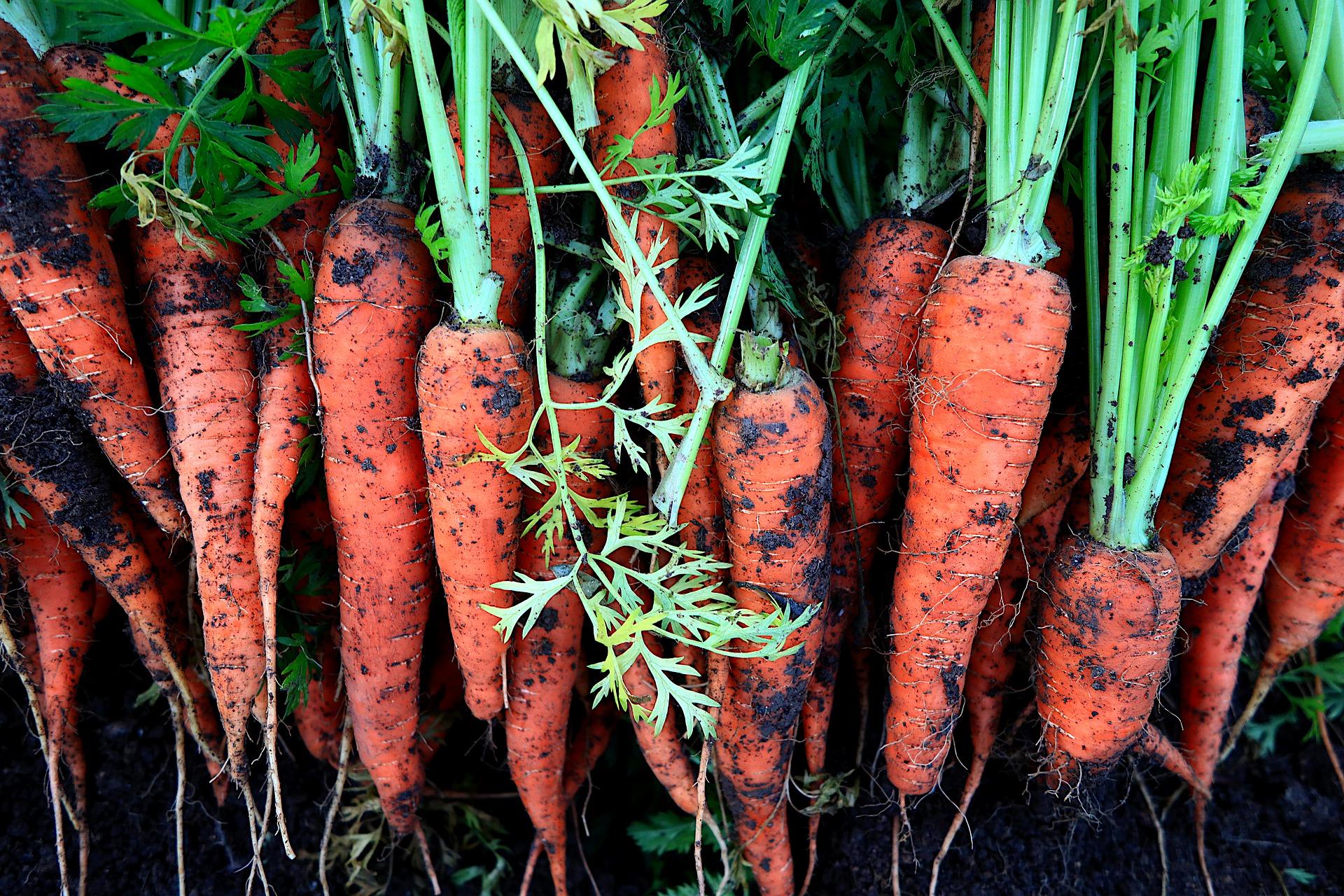 В Україні зростають ціни на моркву та цибулю
