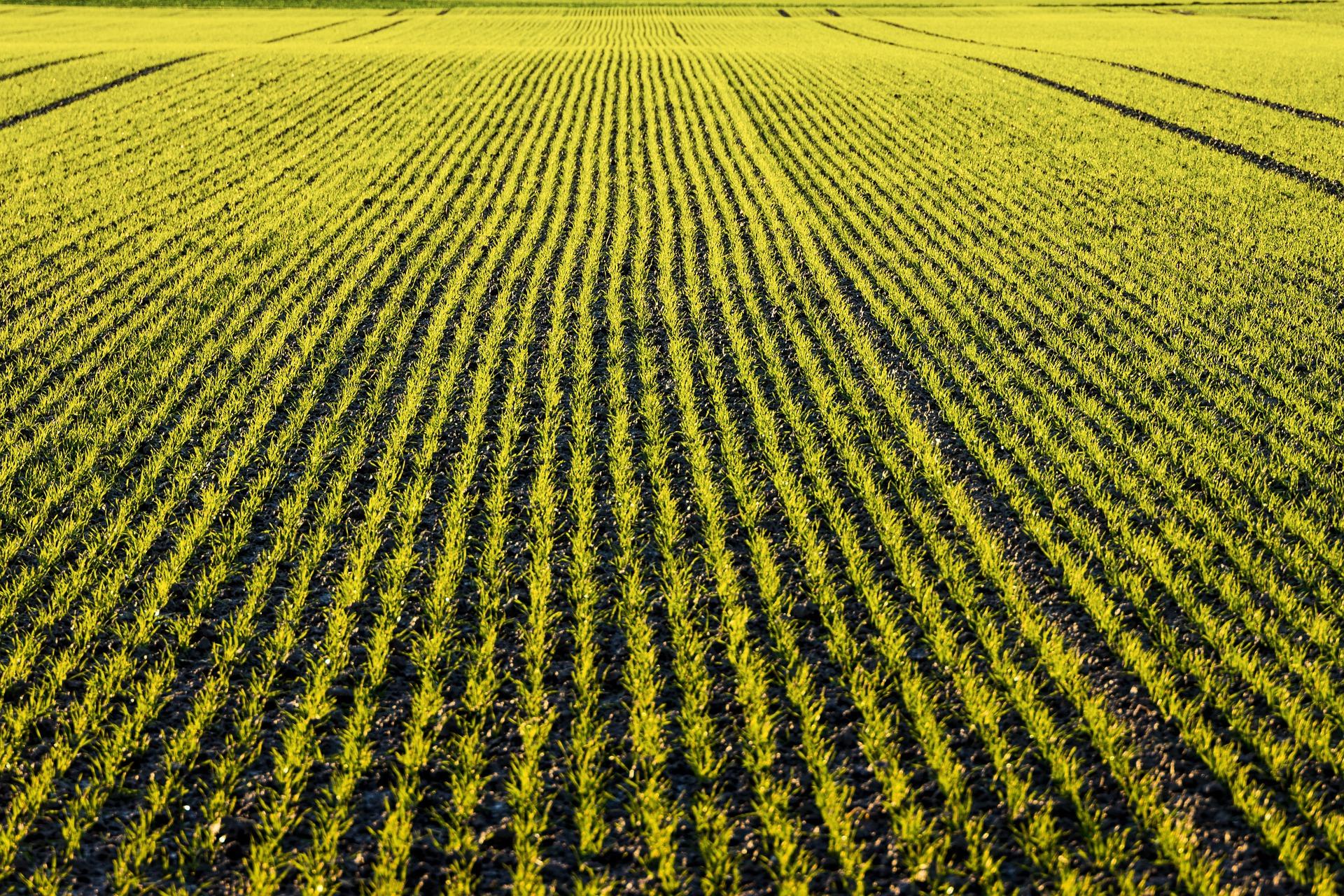 У більшості областей України складаються сприятливі умови для розвитку озимих