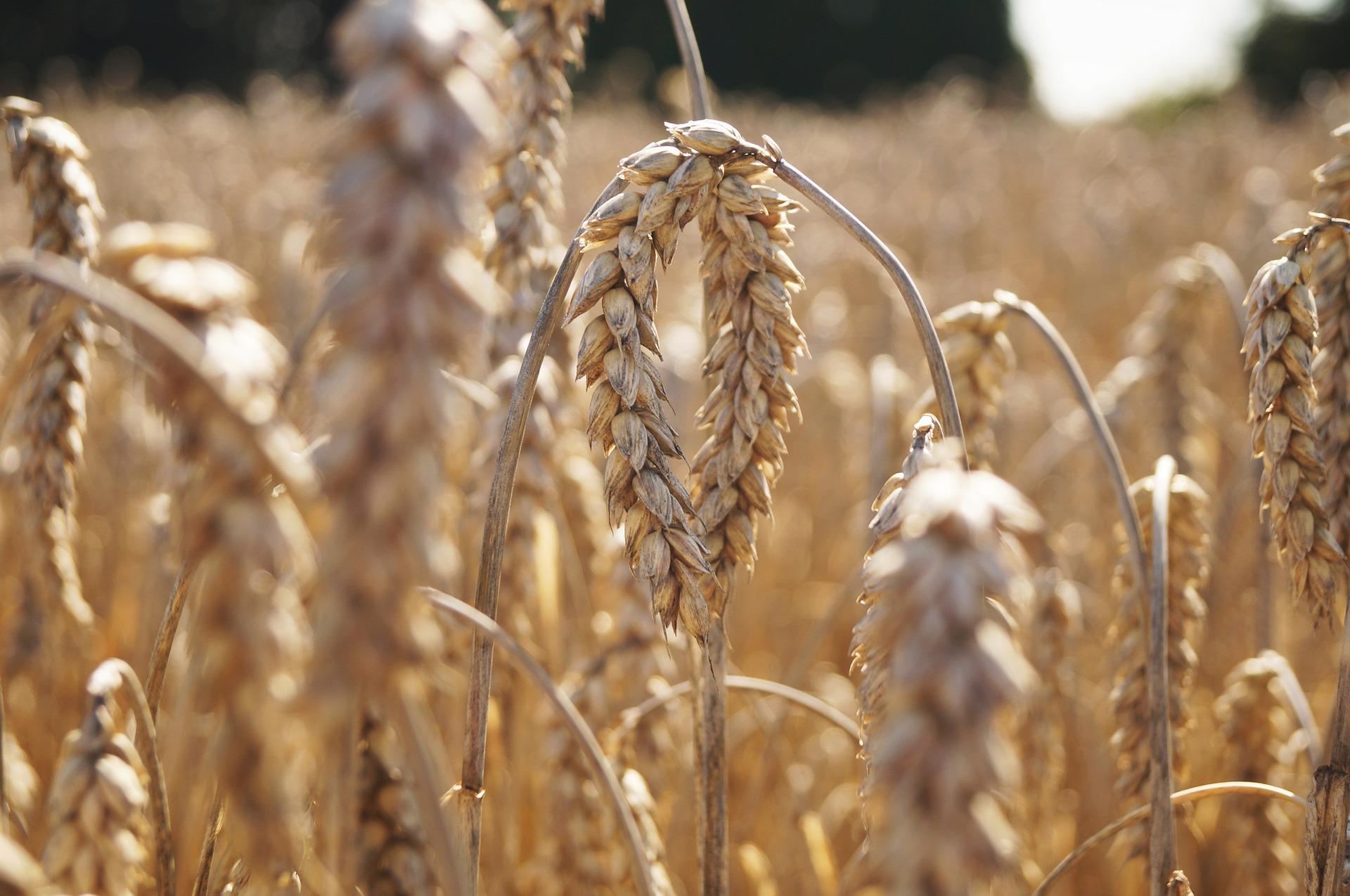 В Україні необхідно переглянути нормативно грошову оцінку земель сільгосппризначення