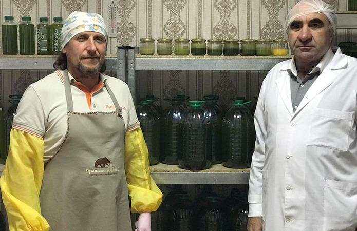 В Україні виробляють зелений мед з хлорелою