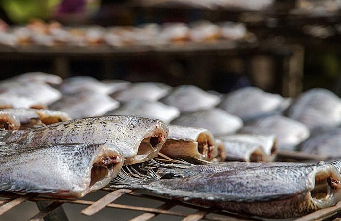 Держрибагентство: Експорт риби збільшився на 19%