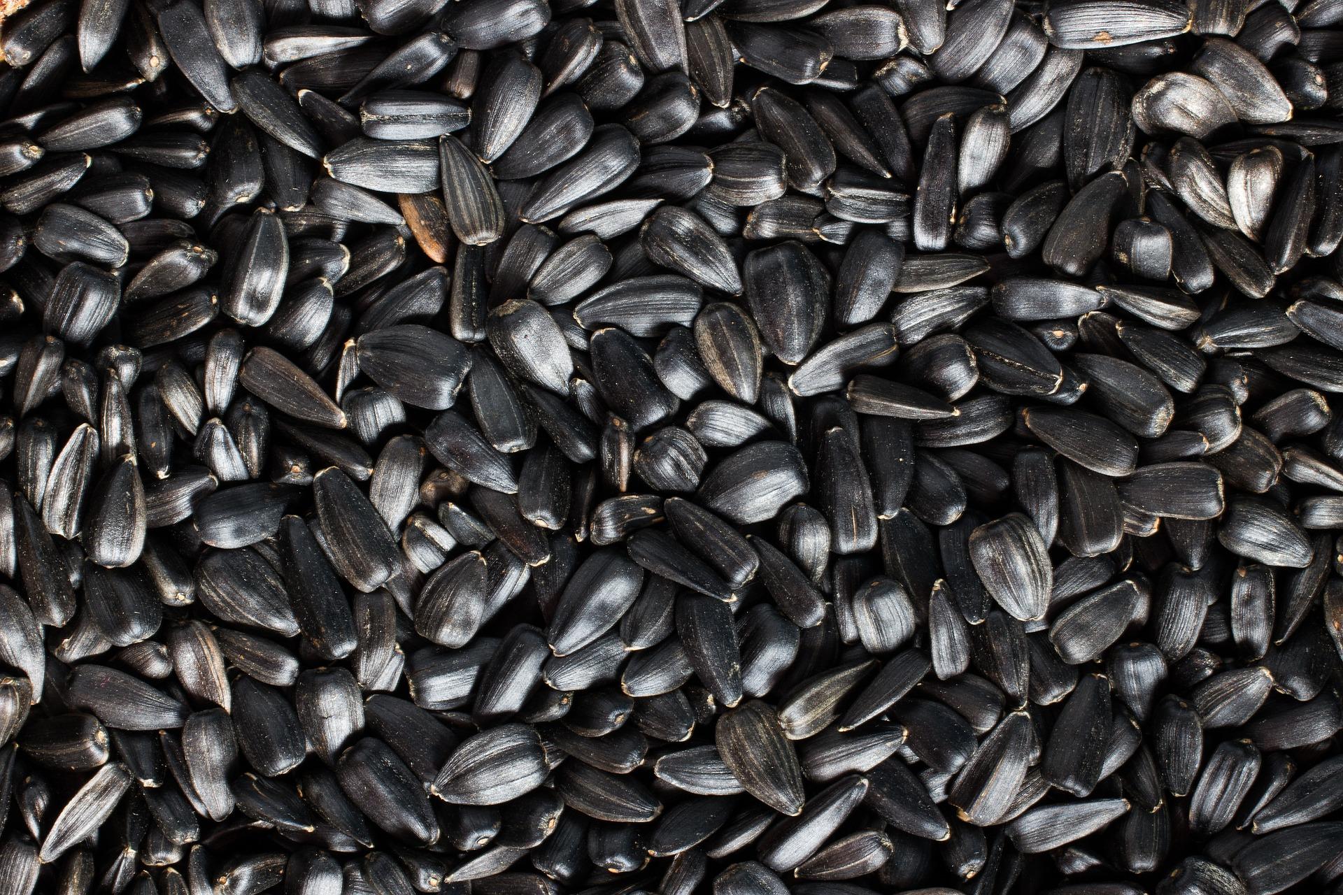 Експорт українського насіння соняшнику зріс у 10,5 раз