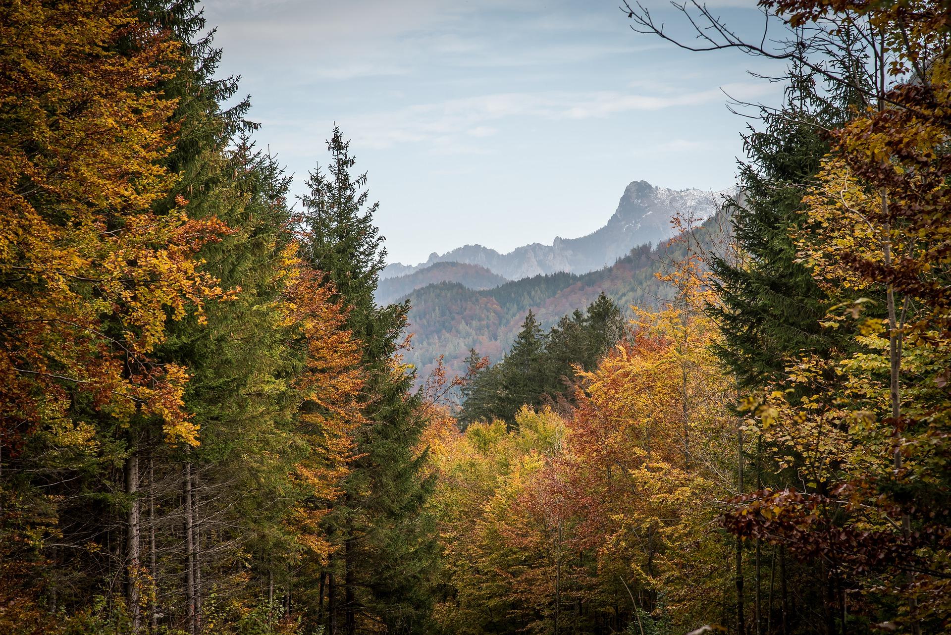 В Україні планують збільшити лісистість території держави до 18%