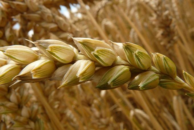 Висоцький: Передумов для перегляду зернового меморандуму немає