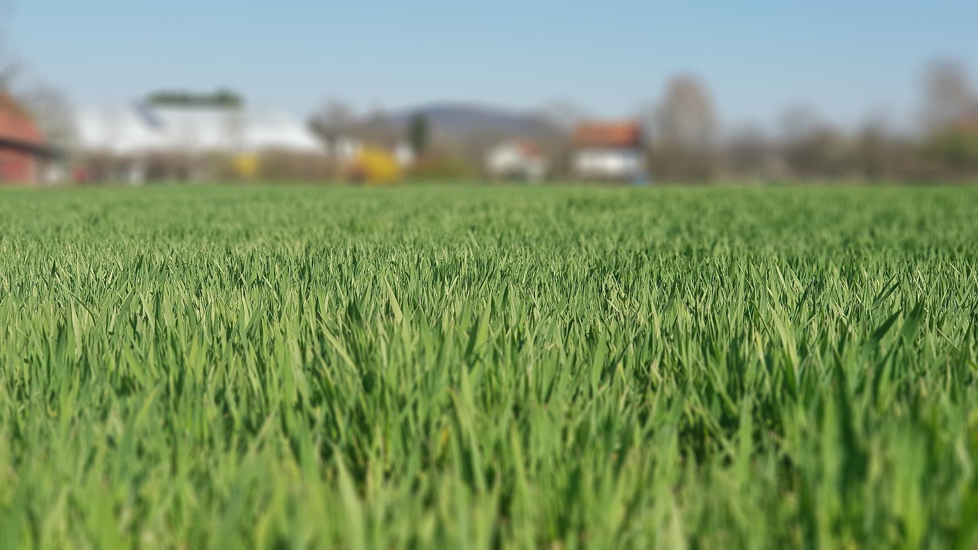 На Харківщині прокуратура вимагає у фермера повернути 366 гектарів орендованих земель