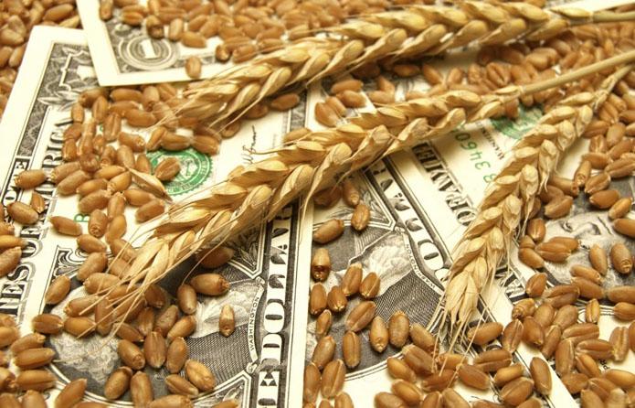 Закупівельні ціни на пшеницю в Україні знижуються