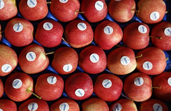 Гадз експортує яблука до Великобританії