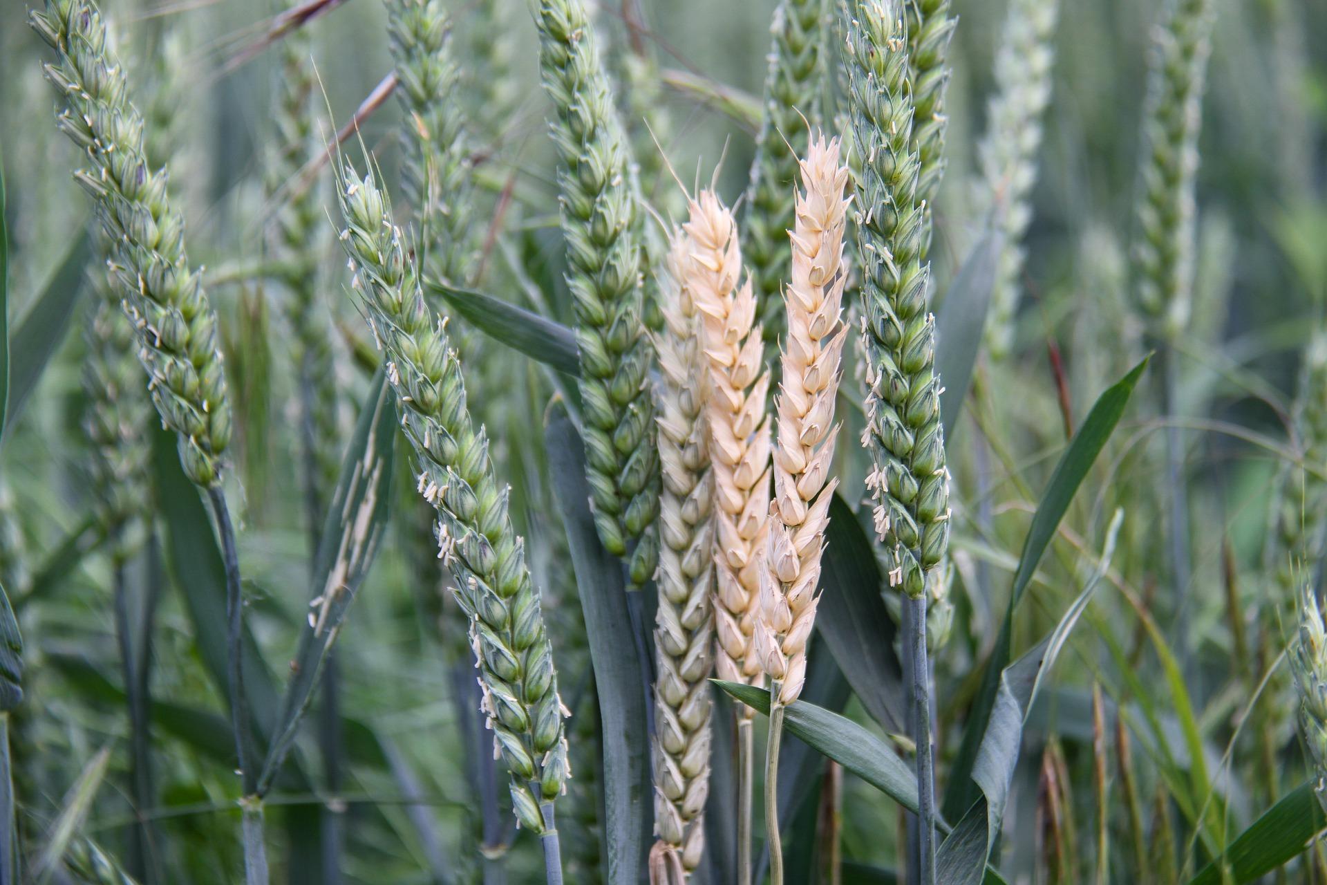 Передумов для перегляду зернового меморандуму немає — Висоцький