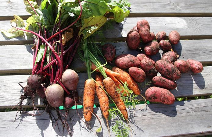 Фермери продають овочі за найнижчими на три роки цінами