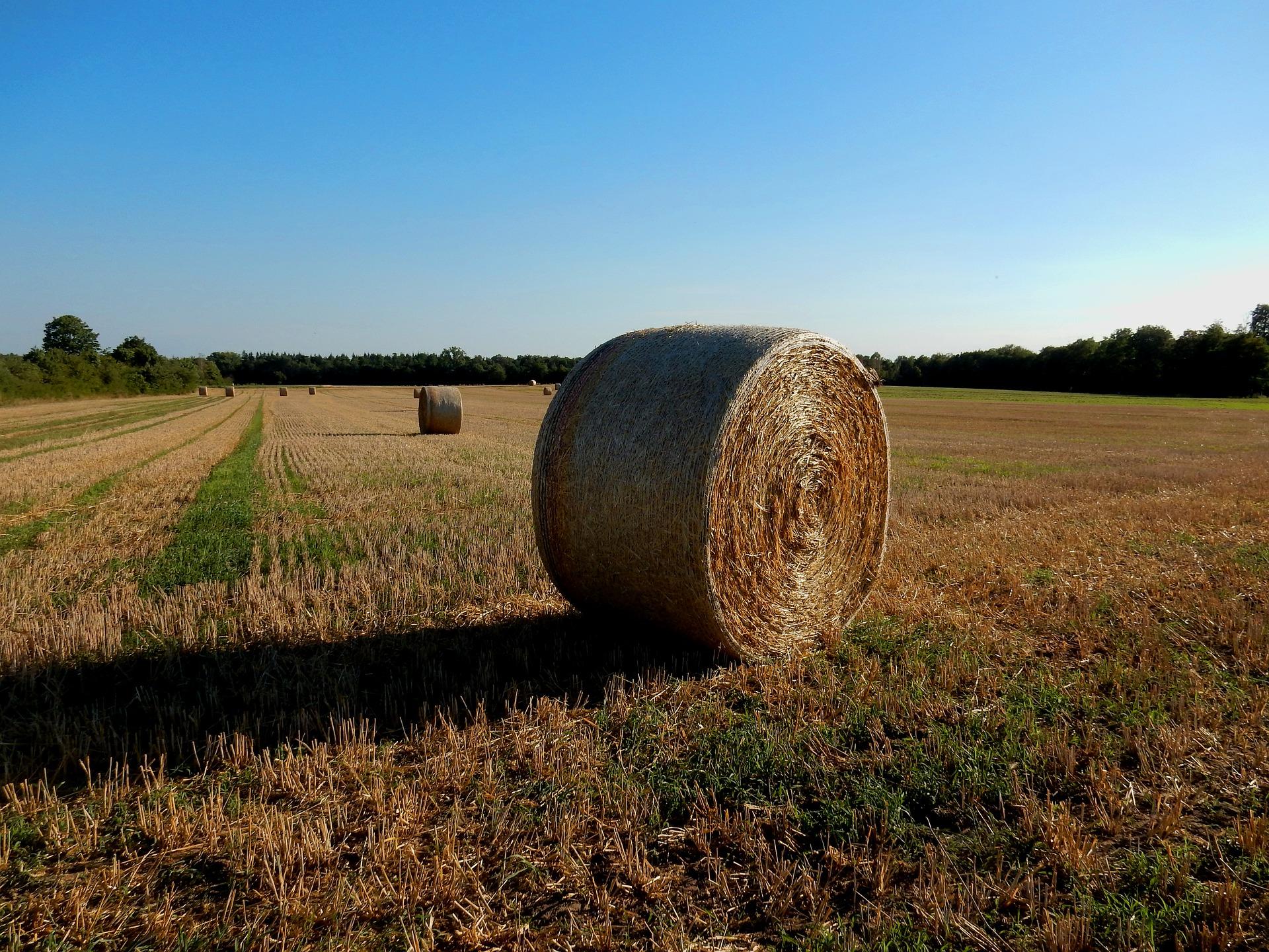 На Харківщині фермер незаконно відібрав у селян майже 100 паїв
