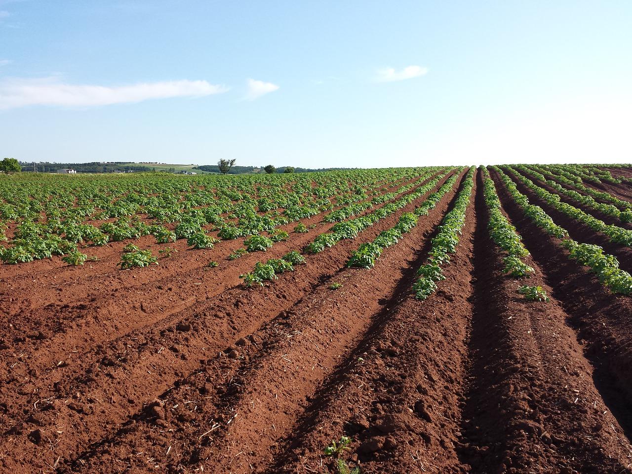 Фермери без кредитної історії зможуть отримати позику на купівлю перших 100 га землі
