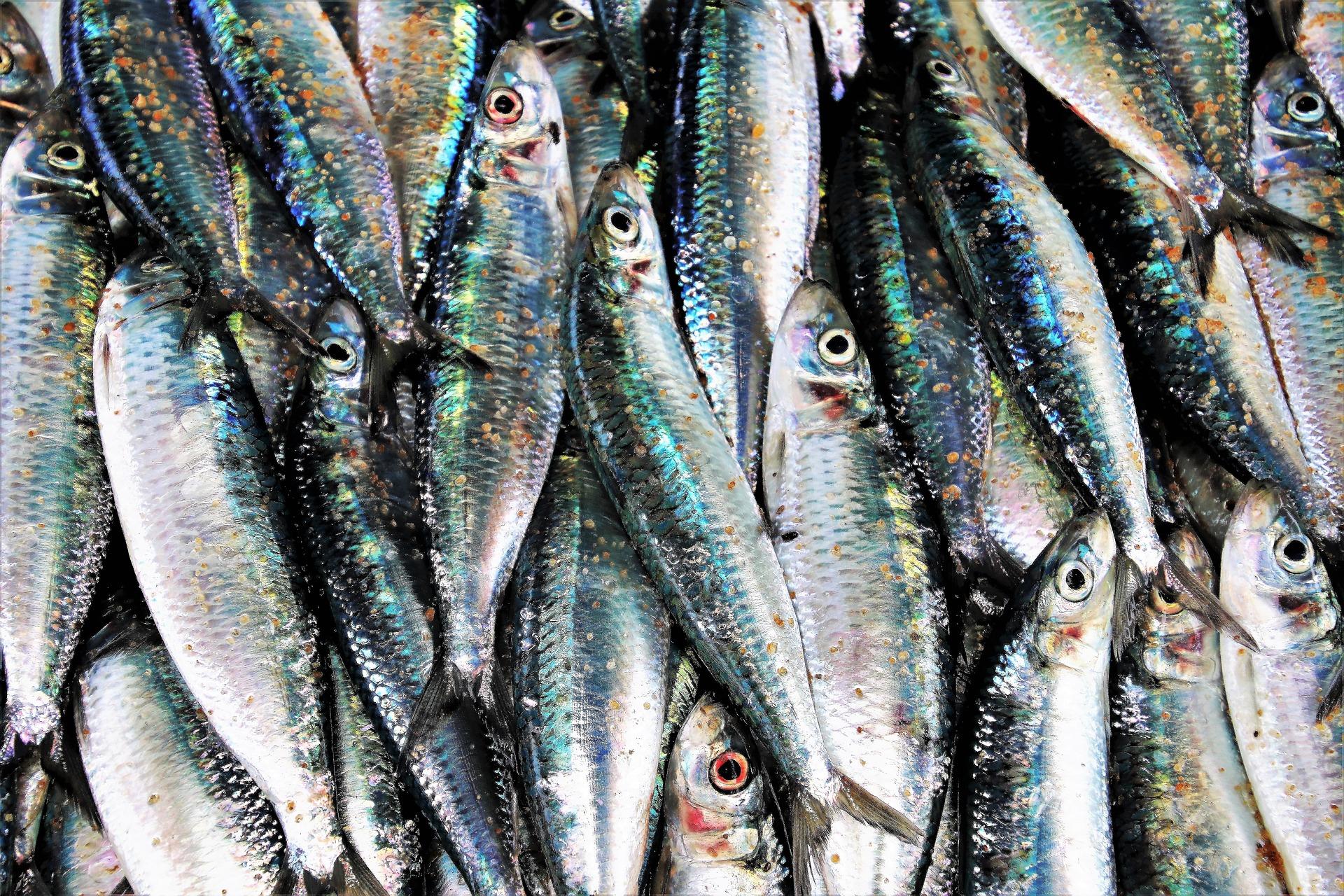 Виручка від експорту української риби збільшилися на 61%