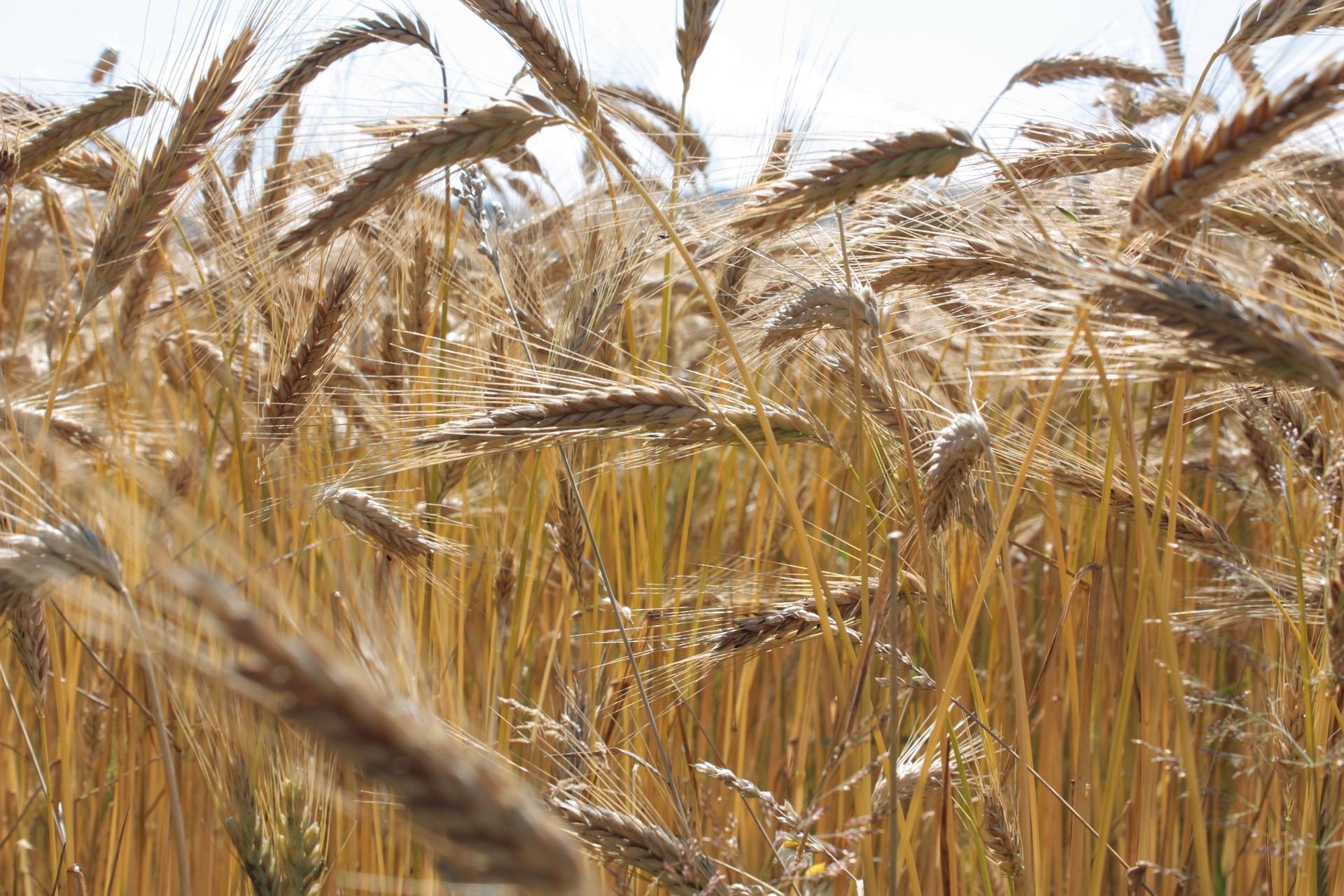 «Аскет Шиппінг» в Бердянську розпочав перевалку зерна нового врожаю