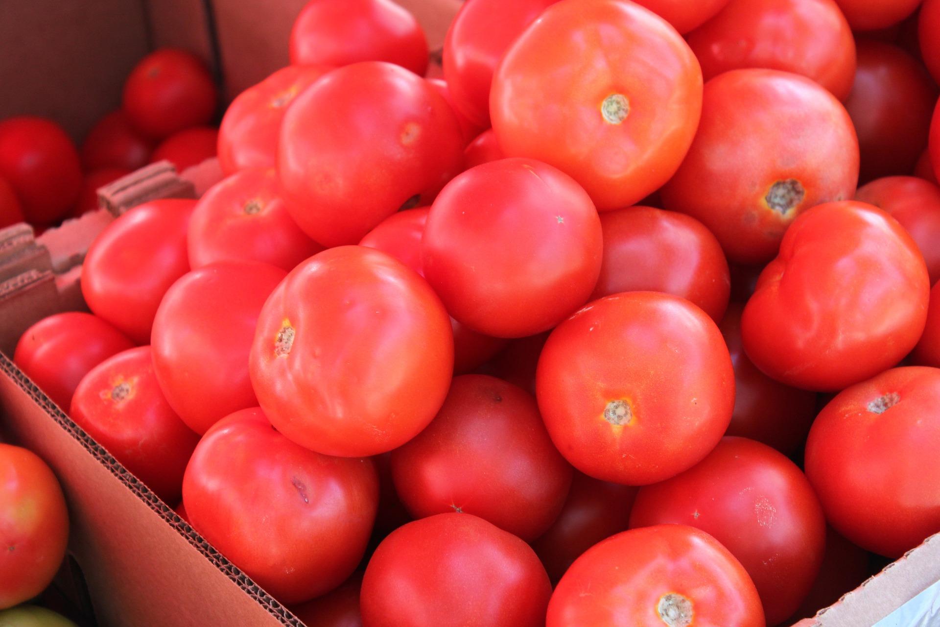 На український ринок надійшли перші партії місцевих тепличних томатів