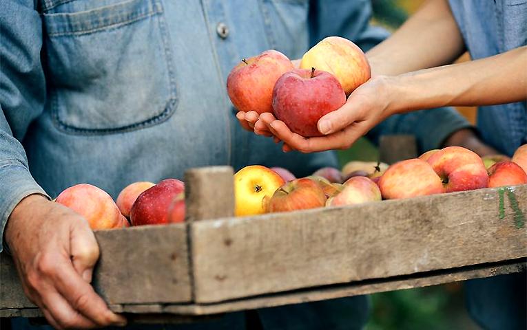 Яблука: чи буде що покласти у сховища?