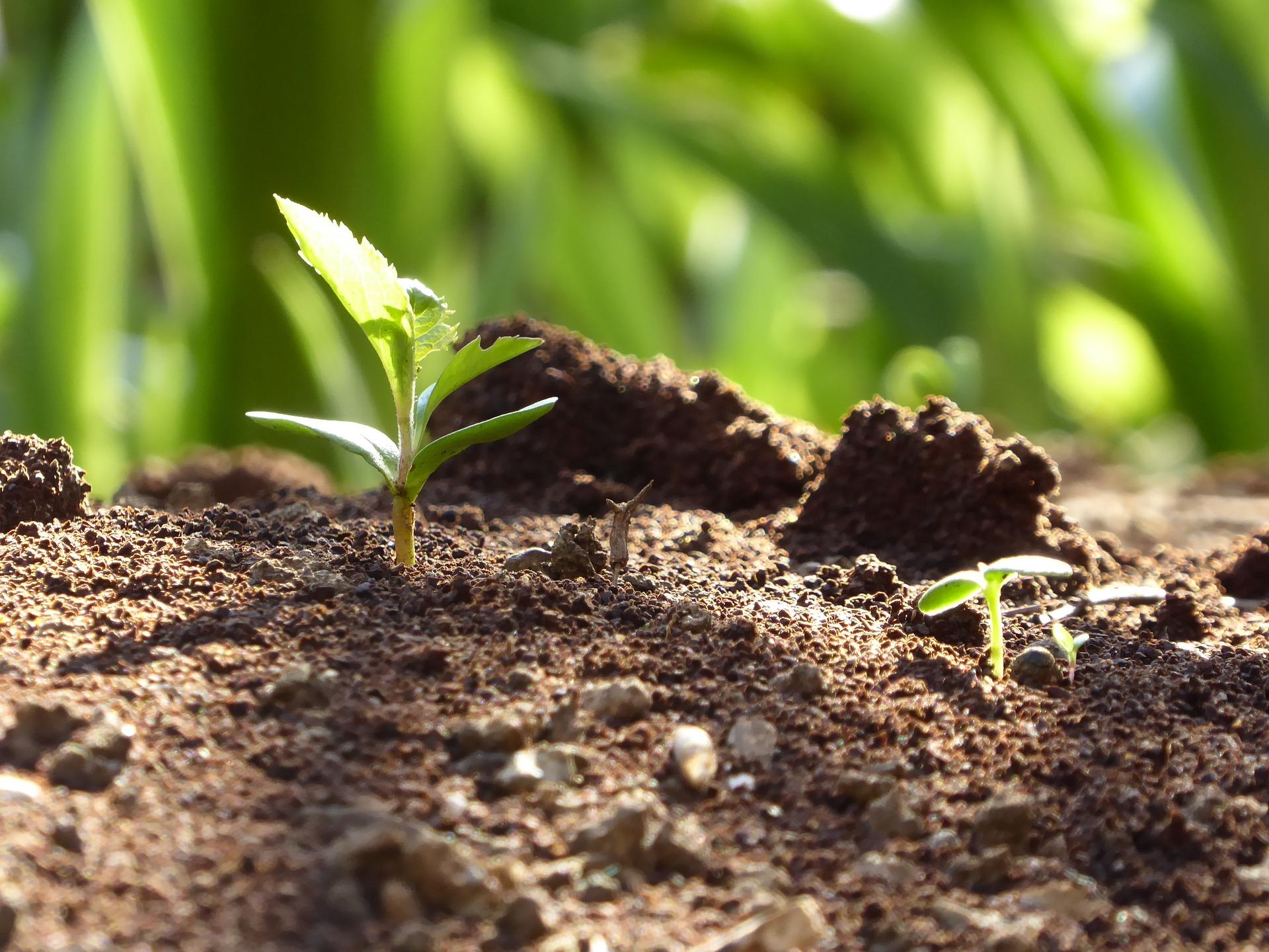 Укргідрометеоцентр фіксує відновлення вегетації зимуючих культур