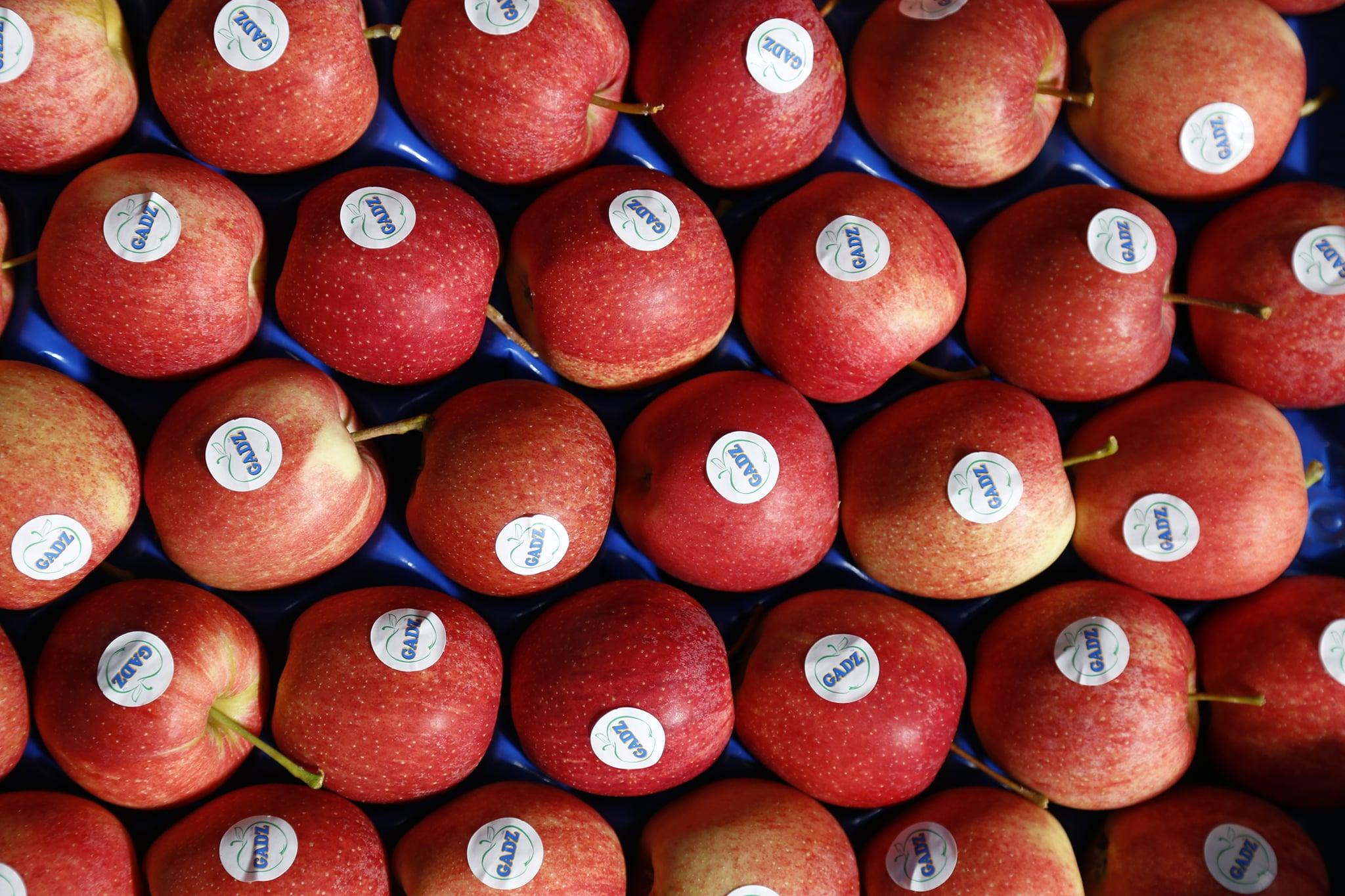ФГ «Гадз» відправило першу партію яблук у Великобританію
